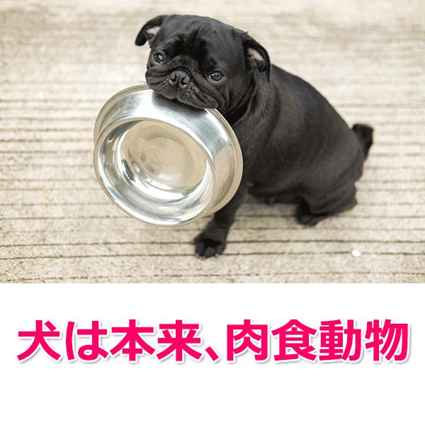 犬は本来肉食動物