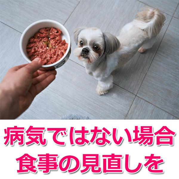 4.愛犬の食事を見直してみる
