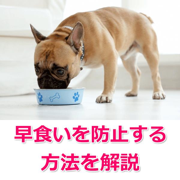 犬の早食いを防止する方法
