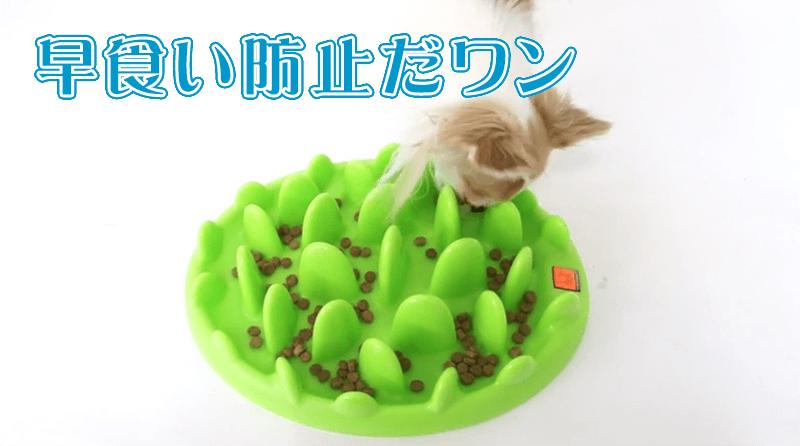 獣医の卵が伝授!犬の早食い防止方法とおすすめ食器