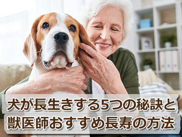 犬が長生きする5つの秘訣と獣医師おすすめ長寿の方法