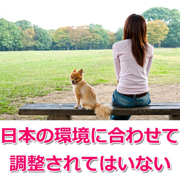 日本の犬に合ったフード?