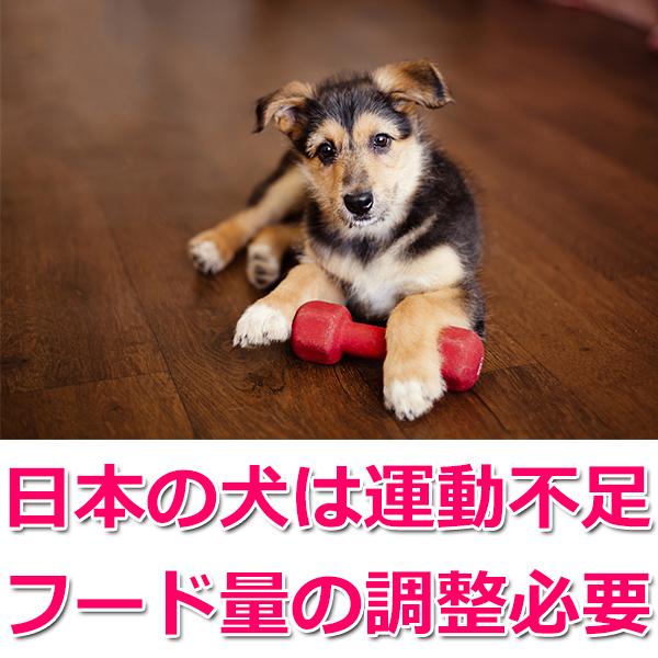 日本の犬は運動不足