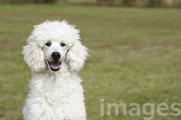 スタイルズ犬種別半生フードは良くない?原材料と共に評価