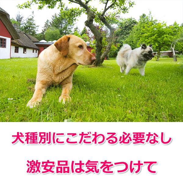 そんなに大差はない?犬種別