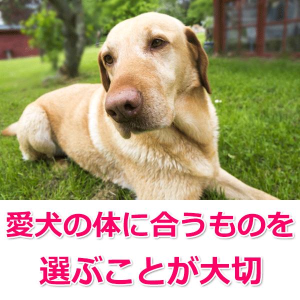 5、無添加ドッグフードの選び方「愛犬に合っているか」