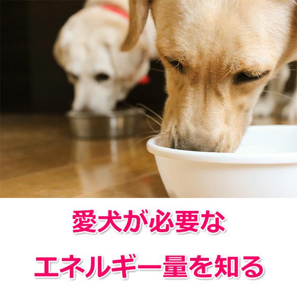 犬種別・年齢別