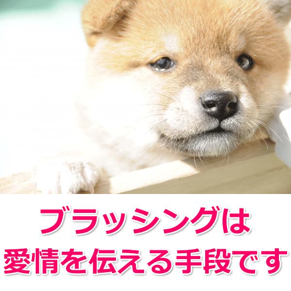 愛犬の毛質に合ったブラシを使用
