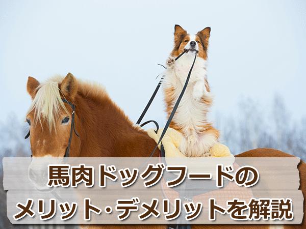 国産の馬肉ドッグフードのメリット・デメリットを解説