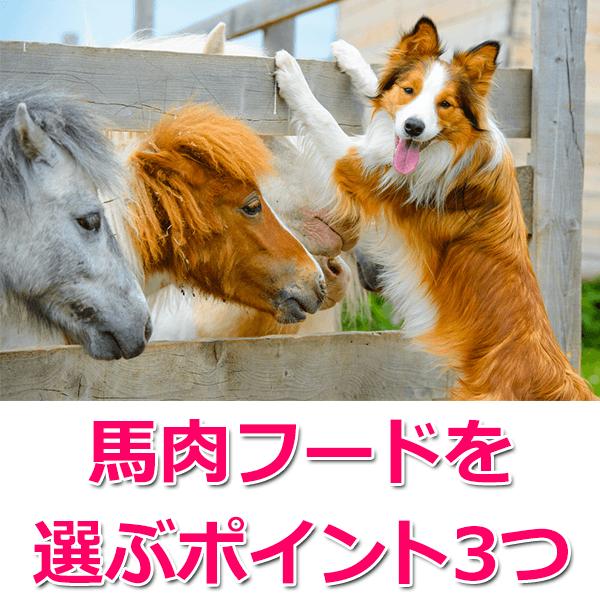 馬肉ドッグフードの選び方3つのポイント