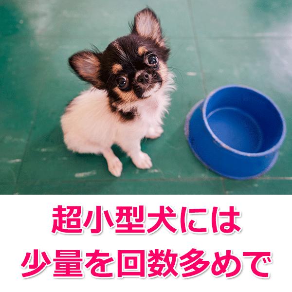 小型犬の場合