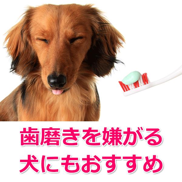 ヒルズのプリスクリプション・ダイエット(t/d)をおすすめの犬