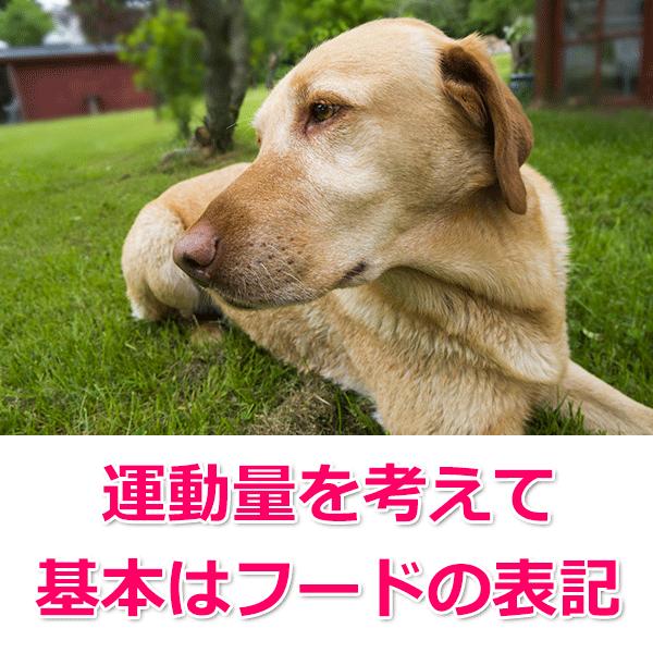 中〜大型犬の場合