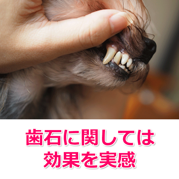 歯石予防として実際に与えた感想