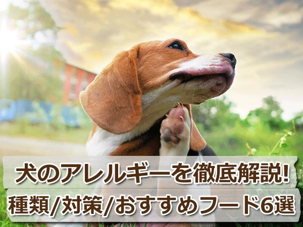 犬のアレルギーを徹底解説!対策とおすすめフード6選