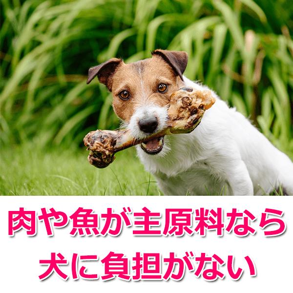 安全な国産ドッグフードの選び方3つ