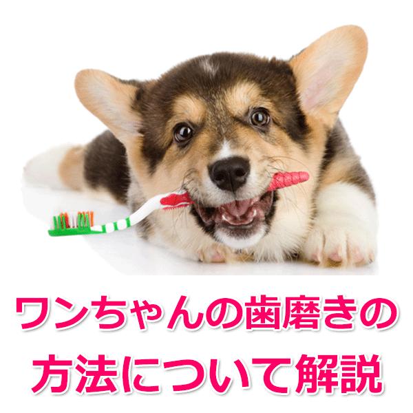 歯磨きするための方法
