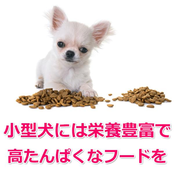 子犬やチワワなどの小型犬