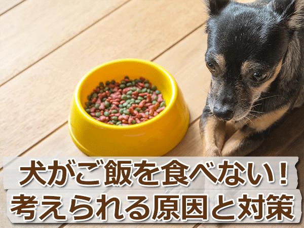 犬が餌を食べないのは病気が原因?考えられる7つの理由