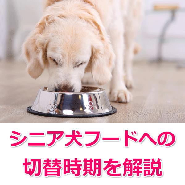 シニア犬ドッグフードへの切替年齢