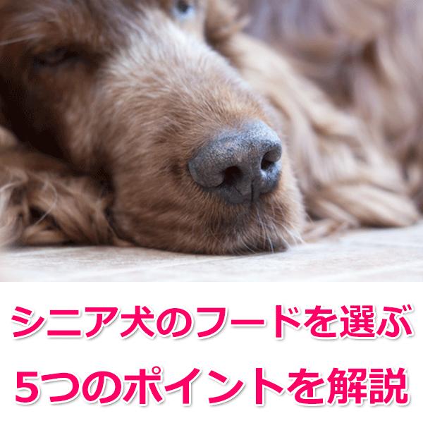 シニア犬ドッグフードの選び方