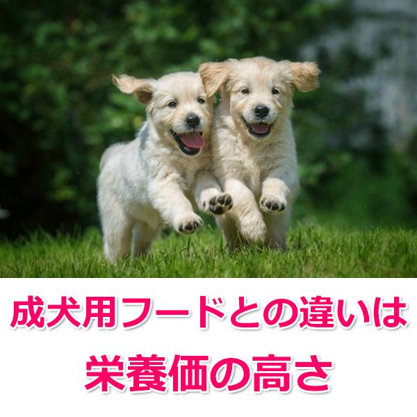 成犬用との違い