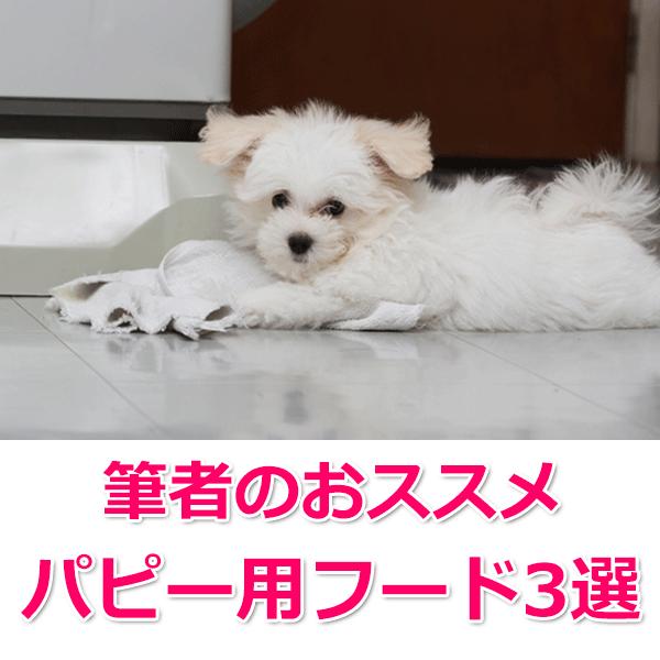 おすすめ「子犬(パピー)用フード」3選