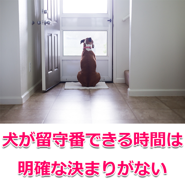 犬の留守番の時間