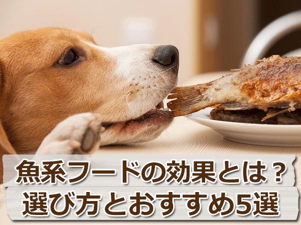 魚系ドッグフードの効果と選び方【おすすめフード5つを比較】