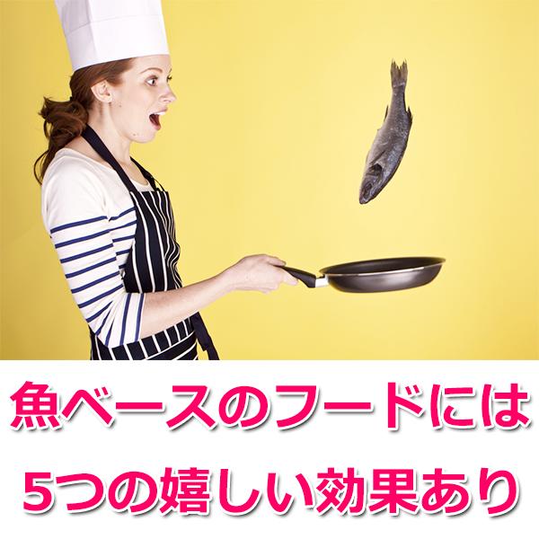 魚ベースのドッグフード5つの効果