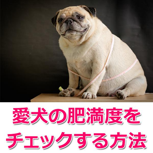 愛犬の体型の現状を知る