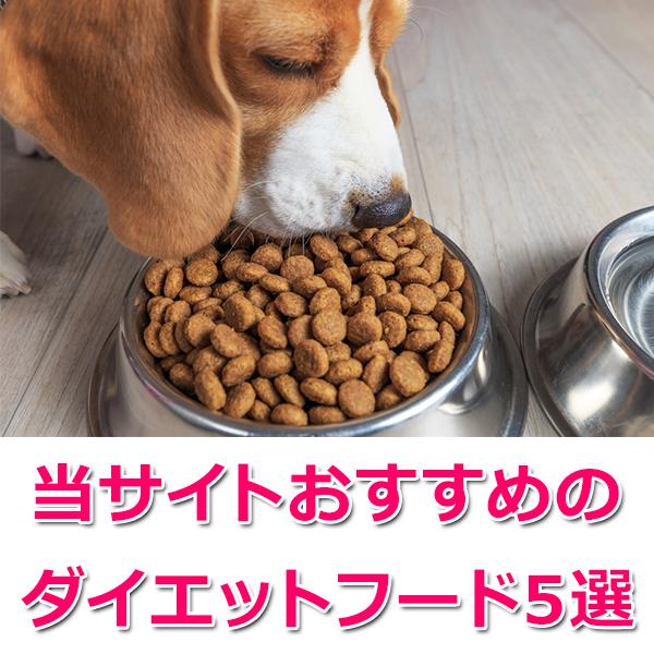 おすすめダイエットフード5選