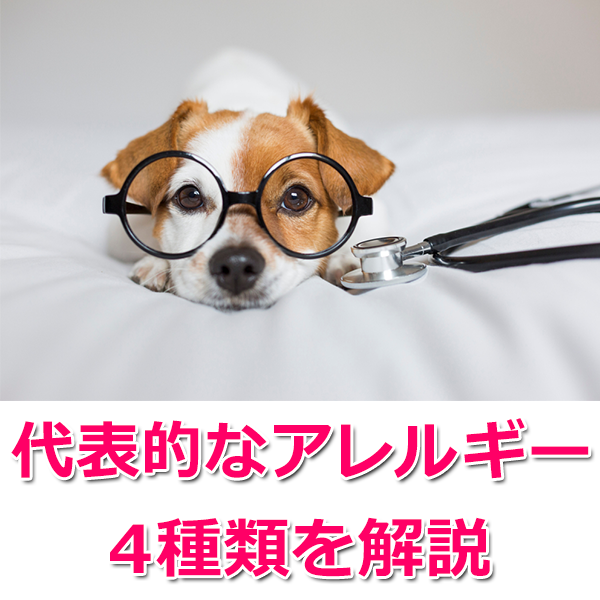 犬のアレルギーの種類