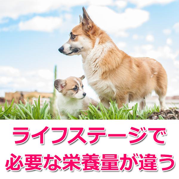 成犬用フードの特徴