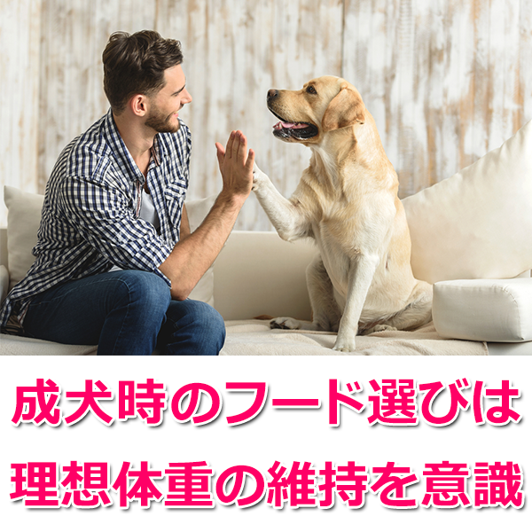 成犬時の餌について