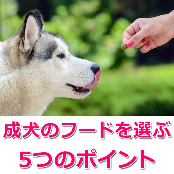 成犬のフードの選び方5つのポイント