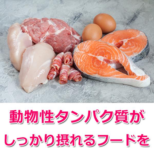 2.タンパク質がしっかり摂れるフードを