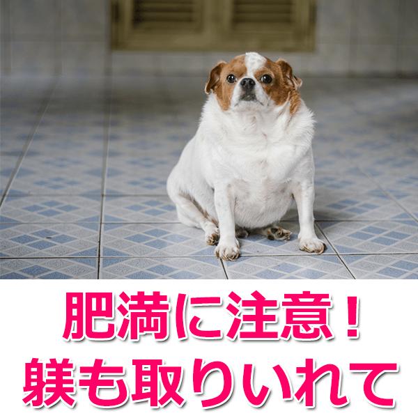 成犬の餌を与えるポイント