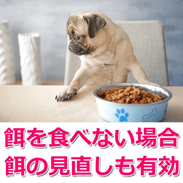 パグが餌を食べない場合の対処法