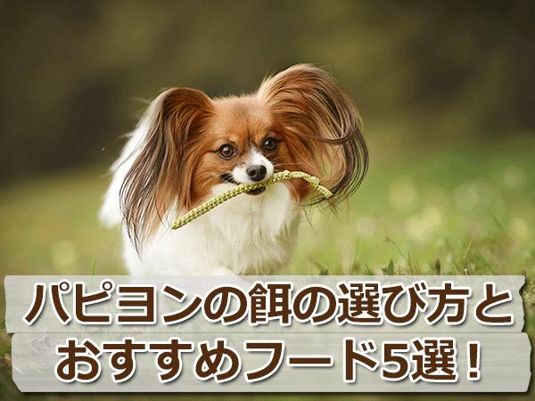 パピヨンの餌の選び方とおすすめドッグフード5選!