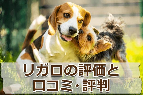 グレインフリードッグフード「リガロ」を評価【評判・口コミ】